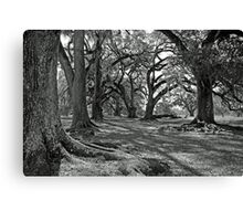 Old Giants for Mary Beth Canvas Print
