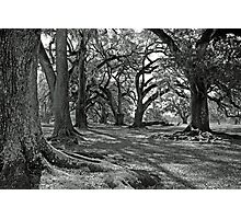 Old Giants for Mary Beth Photographic Print