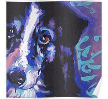 Border Collie Dog Bright colorful pop dog art Poster