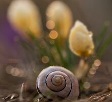 Impression with yellow crocuses and snail shell by JBlaminsky
