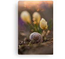 Impression with yellow crocuses and snail shell Canvas Print