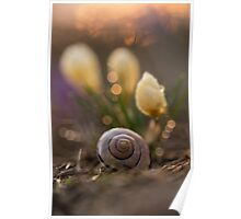 Impression with yellow crocuses and snail shell Poster