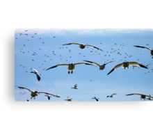 Is it okay to land here? Canvas Print