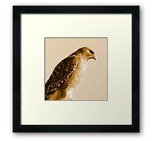 Portrait of a Red-Shouldered Hawk  #1 Framed Print