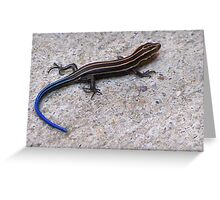 Blue Tailed Skink Greeting Card