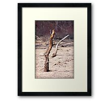 Marsh Trees Framed Print