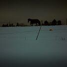 Winter by trbrg