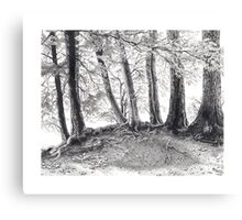 Sheriff Creek Canvas Print