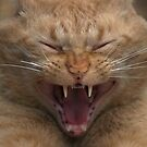 Laughing Cat by Stan Wojtaszek