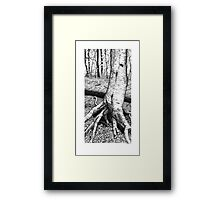 Cannon Hollow Tree Framed Print