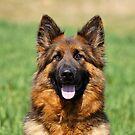 Happy Shepherd by Sandy Keeton