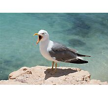 Seagull by water Photographic Print
