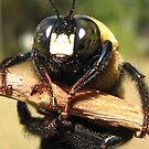 Carpenter Bee by Heavenandus777