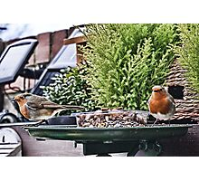 Twin Robins Photographic Print