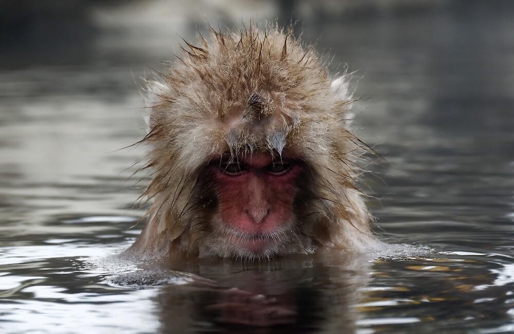 Monkey Day Spa Reflections by Robert Mullner