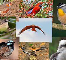 Aussie Birds by Robert Elliott