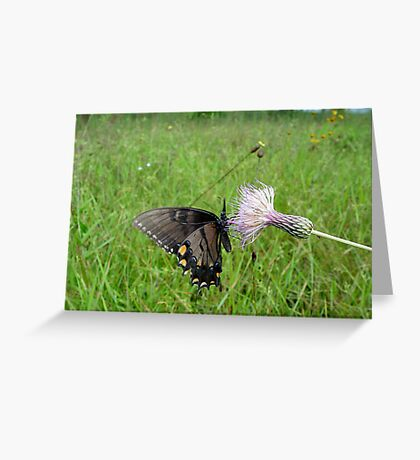 Eastern Tiger Swallowtail on Thistle Greeting Card