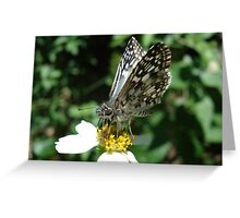 White Checkered Skipper  Greeting Card