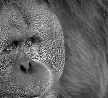 Great Ape by Dan Jesperson