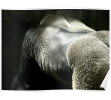 Silver-Back Gorilla Poster