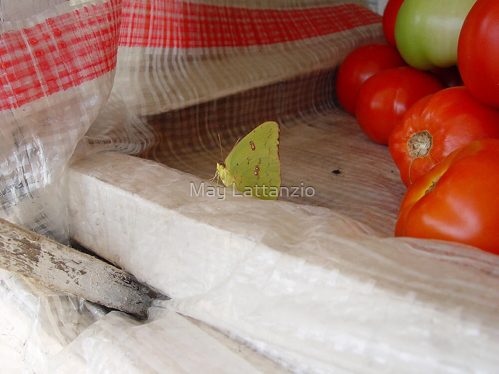 The Tomato Vendor - Common Sulphur Butterfly by May Lattanzio