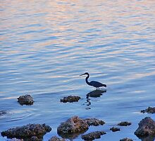 Evening Wade by Carole Andreas