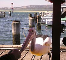 Hand feeding a pelican by georgieboy98