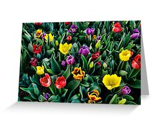 Tulips Moss Vale Park Greeting Card