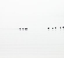Birds at sea by doodlewhale