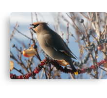 Bohemian Waxwing With A Blueberry Metal Print
