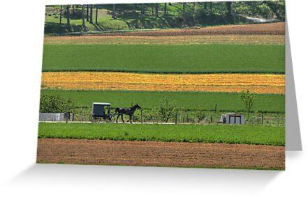 Amish Farmland by Dyle Warren