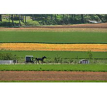 Amish Farmland Photographic Print