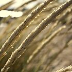 Reeds in the wind by Michael Stocks