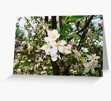 Apple tree blooming Greeting Card