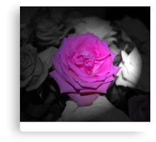 Pink Flower Black & White Background Canvas Print