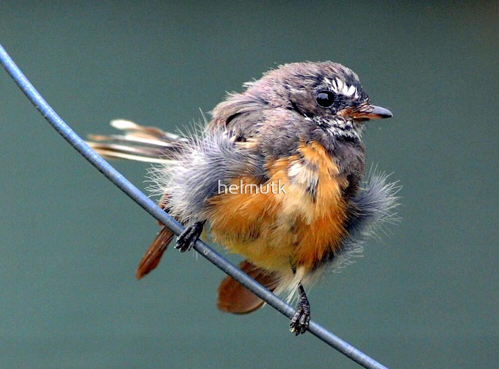 """""""  Bird on the Wire """"  by helmutk"""