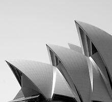Sydney sails by Sean Pinwill