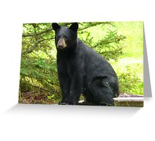Sitting Black Bear...Mind If I Rest Awhile? Greeting Card