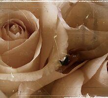 Grandma's roses by Cricket Jones