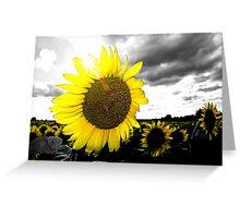 Sunny Sunflower 2 Greeting Card