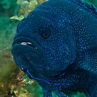 Mr Grumpy Gills by Ben Grant