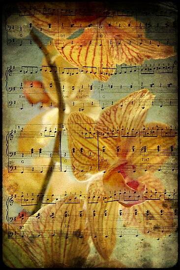 The Beauty of Music............. by Squealia