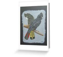 Australian Red-tailed Black Cockatoos Greeting Card