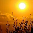 soleil de l'olympe by Bruno Lopez