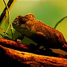 Chameleon by Bruno Lopez