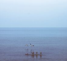 Bird island by doodlewhale