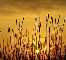 Rural Sunset by Samantha Dean