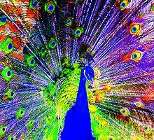 Funky peacock by jonAt