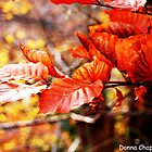 Red Leaves by Donna Chapman
