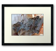 Peeling Birch Tree Framed Print